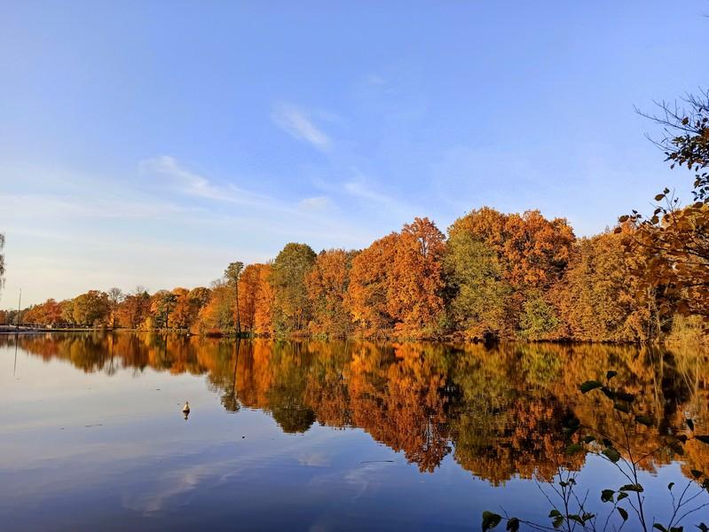 Park w Świerklańcu to jeden z najciekawszych parków województwa śląskiego [Galeria]
