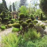 Miejski Ogród Botaniczny w Zabrzu to jedna z perełek województwa śląskiego - galeria